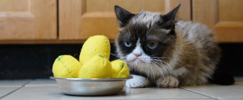 spanish-word-cat-lemon