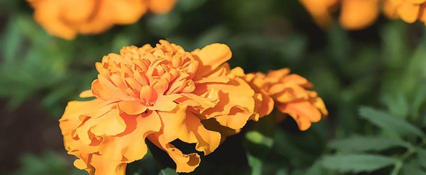 batalla-flores-valencia